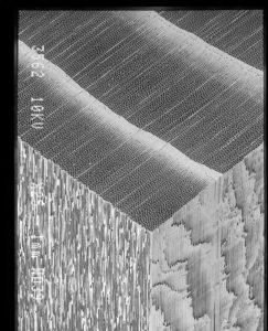スギの走行電顕像 導管
