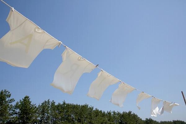干している白いシャツにカツオブシムシが付く