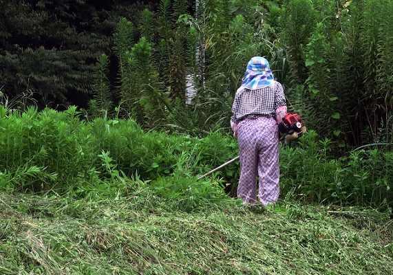 草刈りしてる人