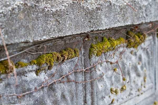 コケの付いたコンクリート壁