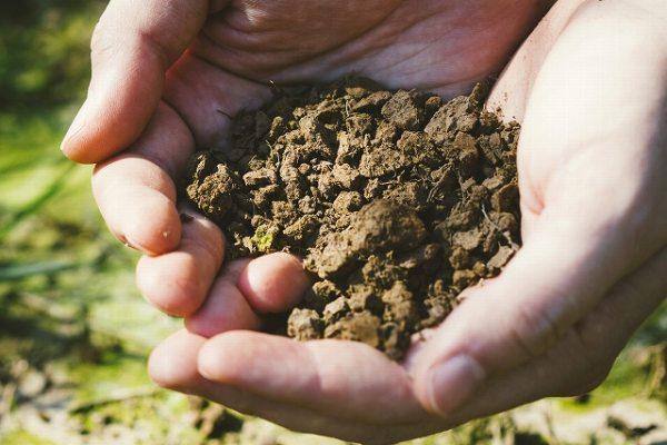 土壌が酸性&アルカリ性だと何が悪い?phを下げる方法&上げる方法