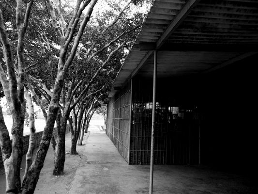 民家に伸びた木の枝
