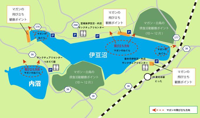 伊豆沼 マガンの飛び立ち地図