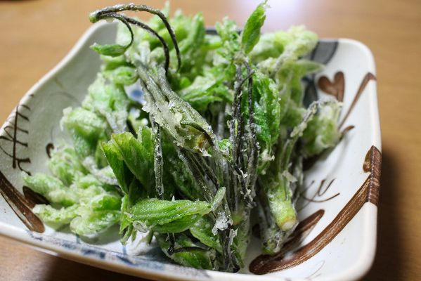 コシアブラ天ぷら