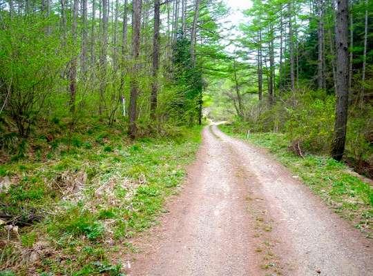 ひらけた林道