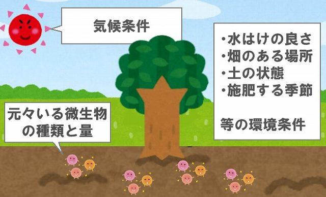 有機肥料と化成肥料の違い 安定感