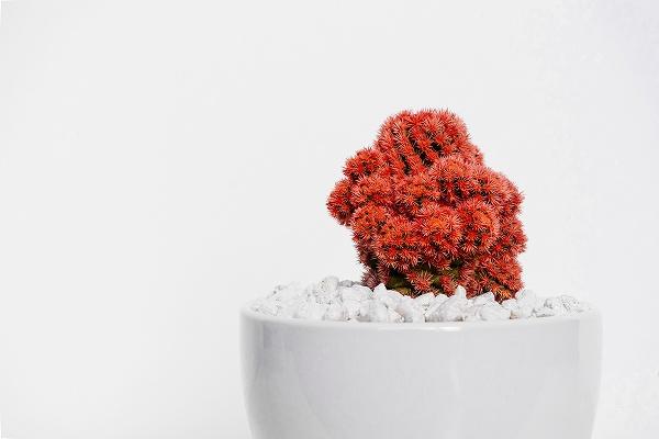 植木鉢の種類