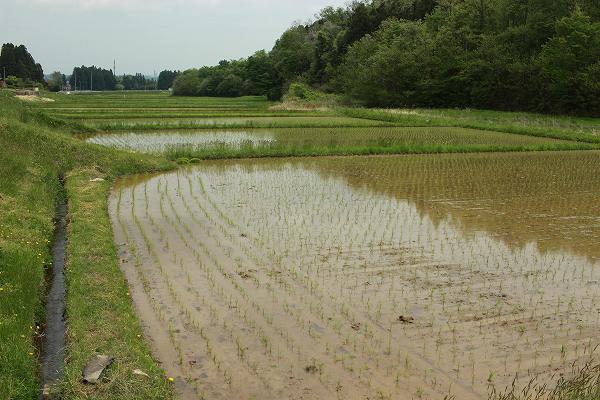 田んぼに水を入れる
