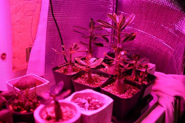 植物育成ライトの効果