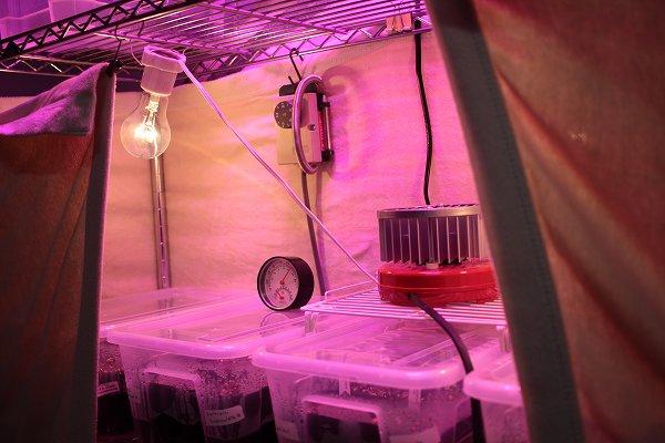 室内温室棚
