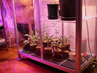 ピカ ガラス温室